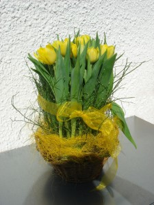Tulpen-Ricardo