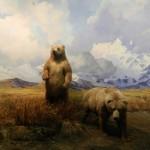 Bären Museum