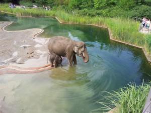 Elefanten Zoo Kopenhagen