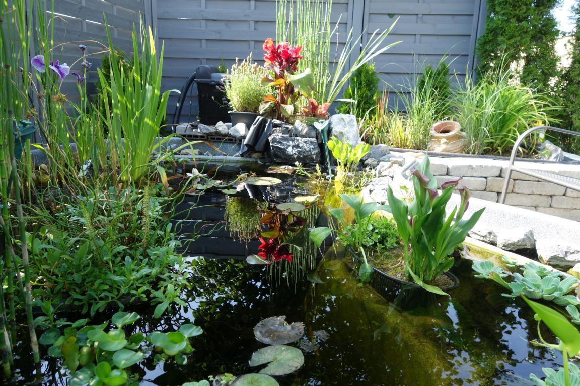 Pict_20150706_165507.jpg Garten Gestaltung Fruhling Sommer