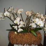 Giardina 2011-15