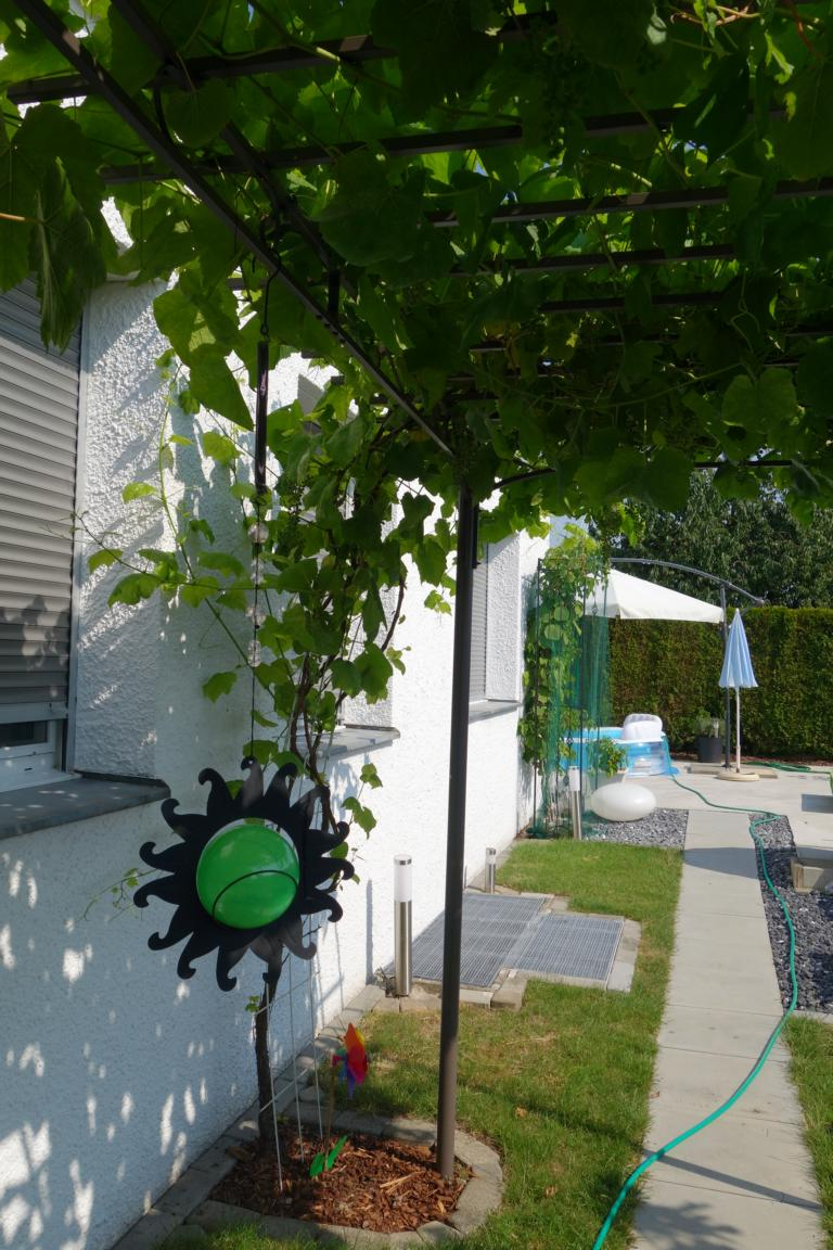 Weintrauben-Pergola im Sommer
