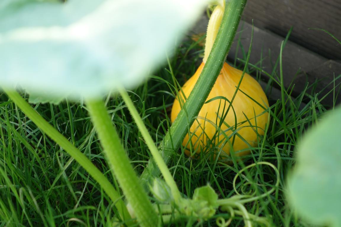 Kleine Melone