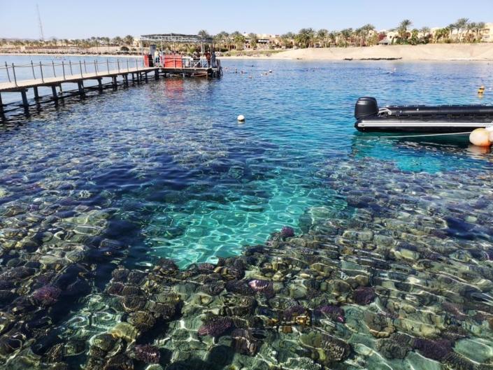 Tauchferien Aegypten 2019-Jaz Lamaya-7