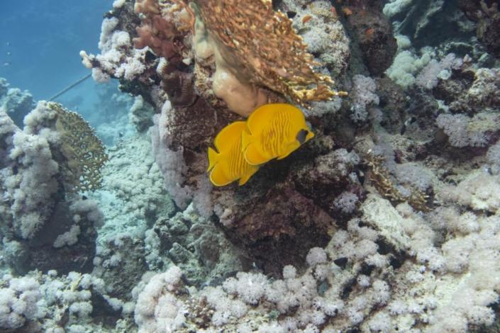 Tauchferien Aegypten 2019-Tauchen Fische 3