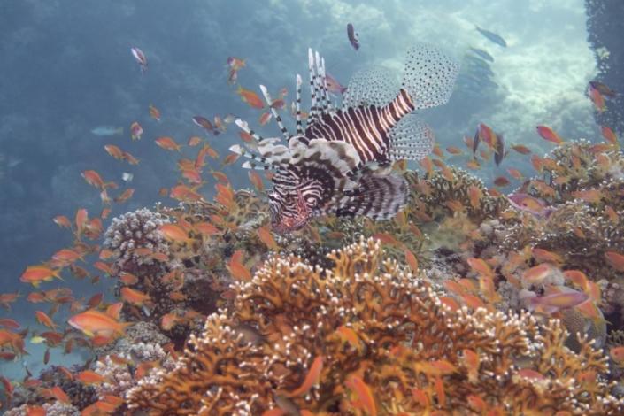 Tauchferien Aegypten 2019-Tauchen Fische