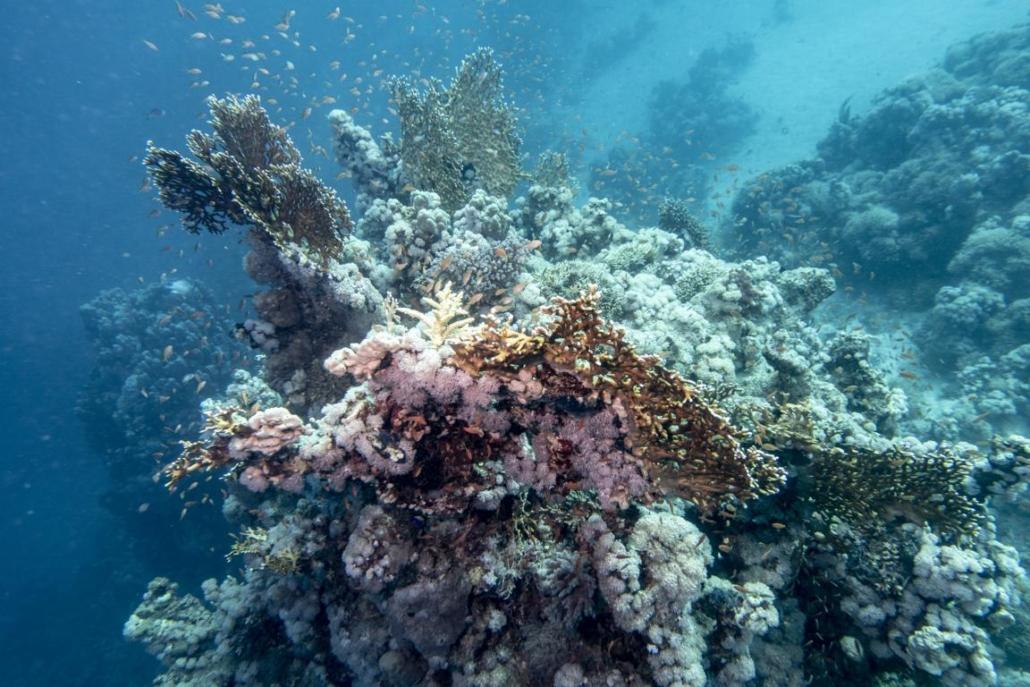 Tauchferien Aegypten 2019-Tauchen Fische 8