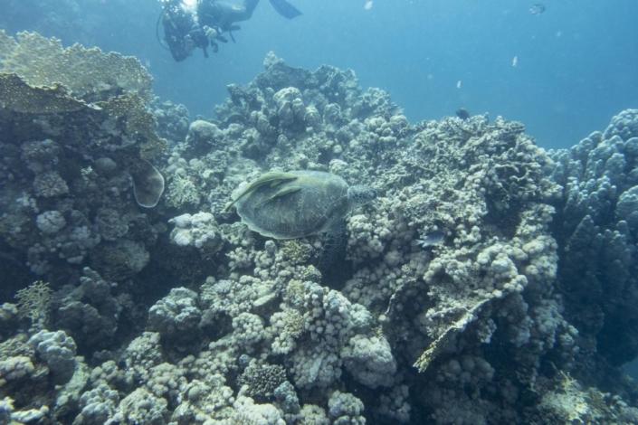 Tauchferien Aegypten 2019-Tauchen Schildkröte