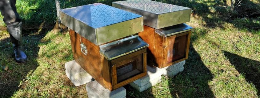 Imker in Ausbildung - Bienenhaus austellen Maerz-2019